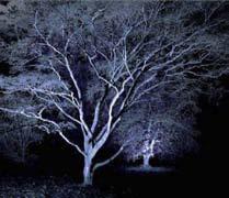 استفاده از نور آبی در نورپردازی درخت