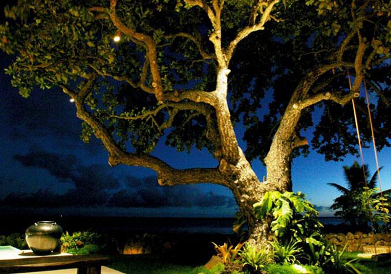 نورپردازی یک تک درخت توسط نور سفید گرم