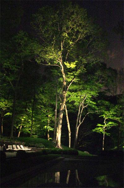 نورپردازی و رفلکشن(بازتابش) درخت بر روی آب