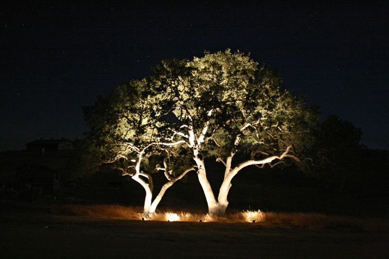 نورپردازی دو درخت تنها در فضای سبز