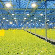 greenhouse-lights