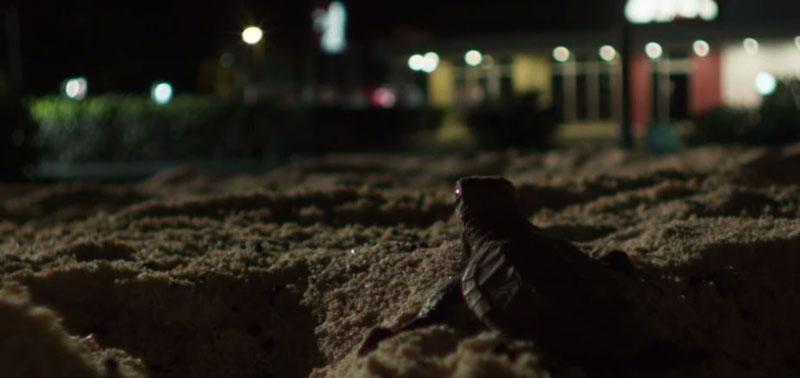 آلودگی نوری-تاثیرات ناملوب نورپردازی مصنوعی بر مسیریابی لاک پشت ها